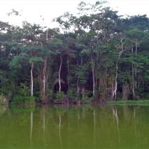Lemon Lagoon Limoncocha
