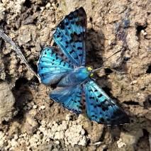October - Migration of Butterflies 10