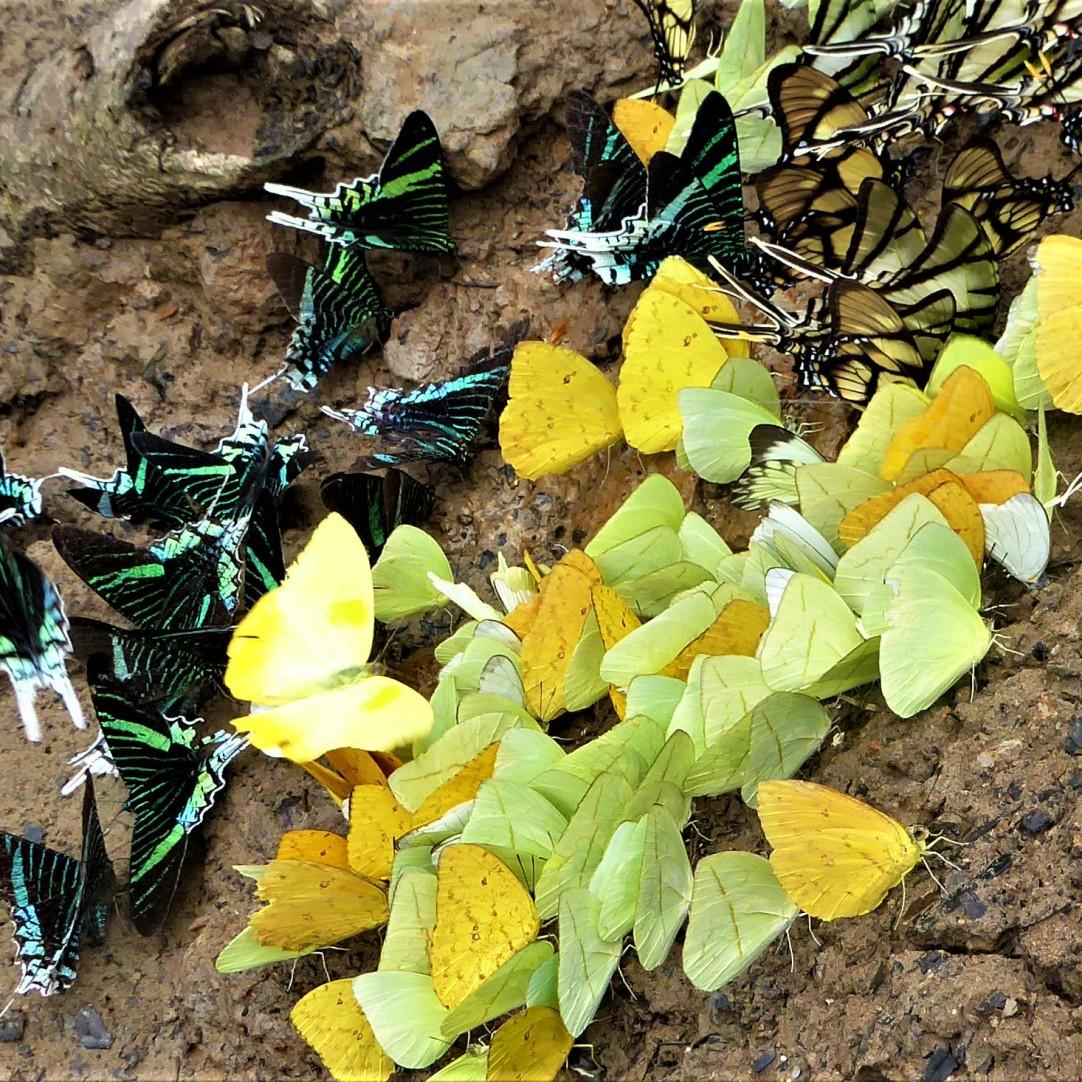 October - Migration of Butterflies 14