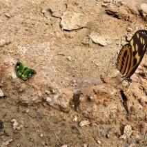 October - Migration of Butterflies 3