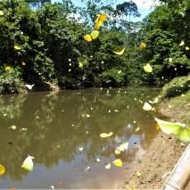 October - Migration of Butterflies 5