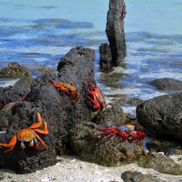 holy crab!